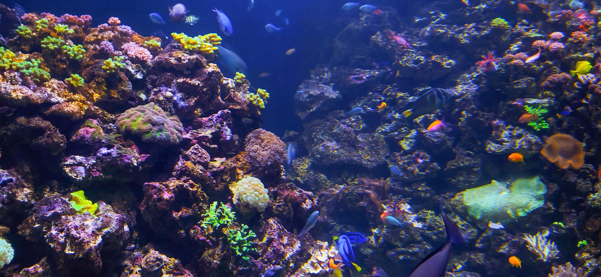 riodejaneiro-aquario