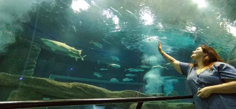 riodejaneiro-aquario5